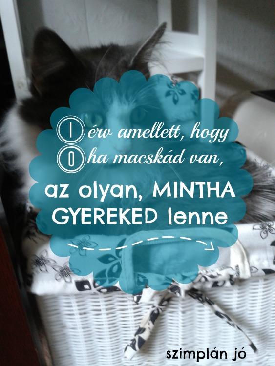 macskagyerek